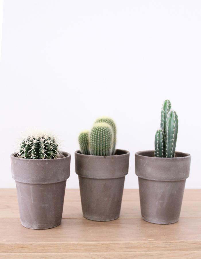 Potten Voor Planten.Cactus In Terracotta Pot Bloombezorgen Nl