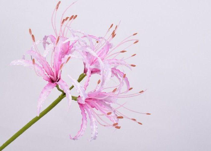 zijde bloem nerine silkka